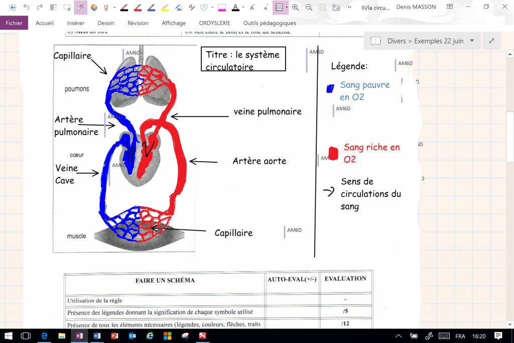 Diapo 3 : Exemple de cours affiché sur Ordylexie; schéma du système circulatoire.