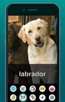 Diapo 4 : Application Aipoly vision reconnaissant un chien labrador.
