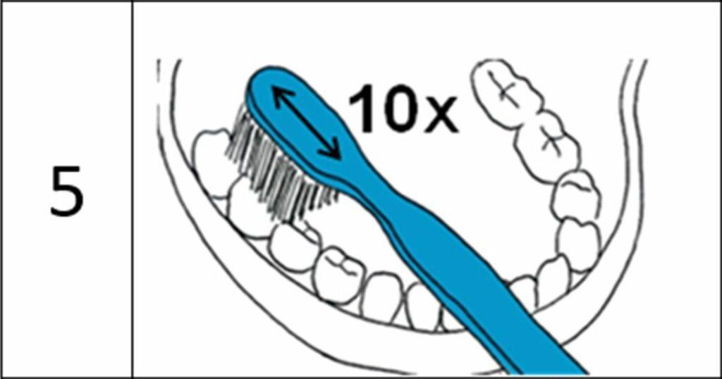 Diapo 4 : Image de l'application çadet qui représente la manière dont il faut se brosser les dents