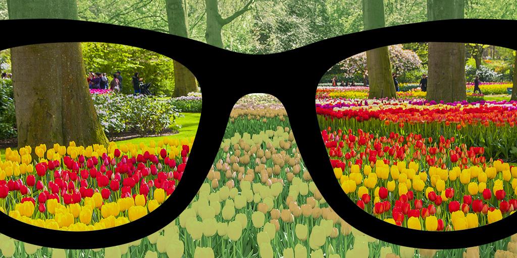 Diapo 3 : Un champ de fleur en arrière plan avec les changements qu'apporte les lunettes enchroma