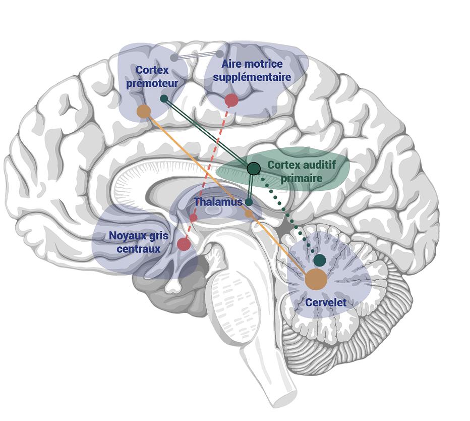 Diapo 4 : Image montrant comment le dispositif Walk agit sur le cerveau